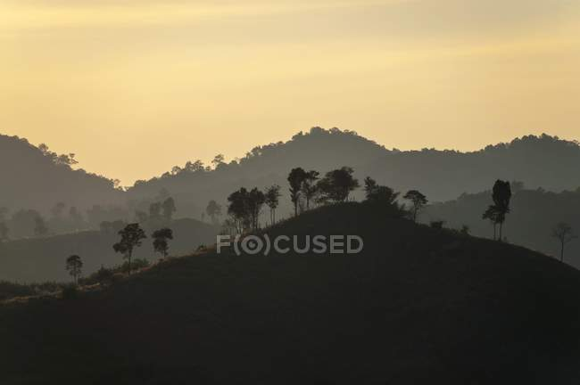 Backlit landscape with trees silhouettes in evening light, Northern Thailand, Thailand, Asia — Stock Photo