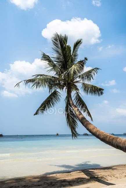 Палм-на піщаному пляжі з бірюзове море, пляжу та, Ко Тао, Сіамській, Таїланду, Азії — стокове фото