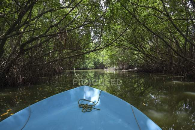 Boat riding through mangrove forest in Bentota Ganga river in Sri Lanka, Asia — Stock Photo