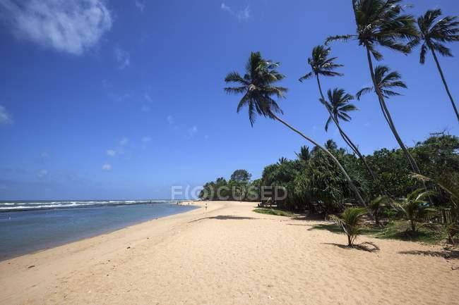 Довгий піщаний пляж з пальмові дерева, туристичному районі містечка, Західна провінція, Шрі-Ланка, Азії — стокове фото