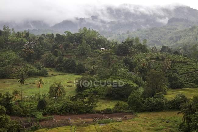 Краєвид та тропічна рослинність Sinharaja заказник, Шрі-Ланка, Азії — стокове фото