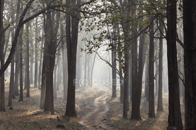 Morning mist and dirt road in woods, Nagarhole National Park, Karnataka, India, South Asia, Asia — Stockfoto
