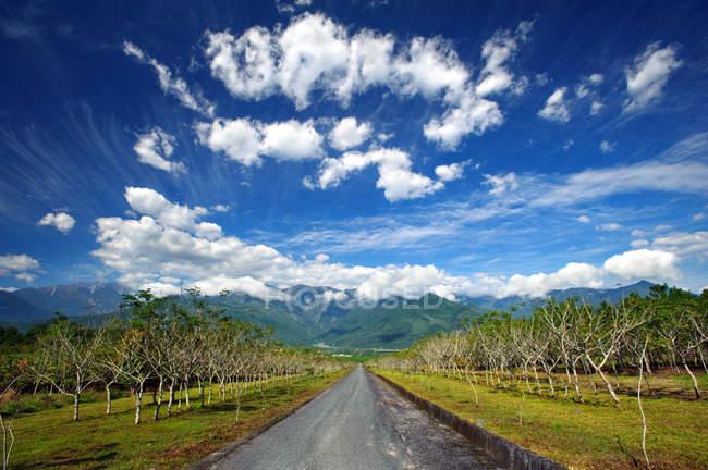 Сельская деревьями дорога, Хуалянь, Тайвань, Азия — стоковое фото