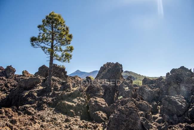 Paisagem vulcânica no Parque Nacional de Teide em Tenerife, Ilhas Canárias, Espanha, Europa — Fotografia de Stock