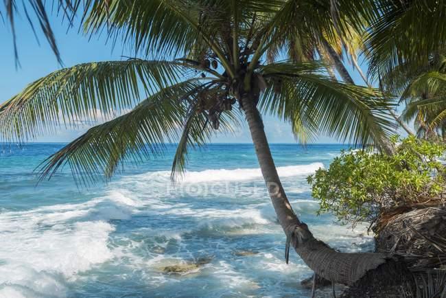 Тропічний пляж з кокосової пальми на атол Fuvahmulah в Азії Індійського океану, Мальдівські острови, — стокове фото