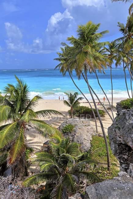 Palm et roches sur fond Bay plage de la Barbade, les îles des Caraïbes, l'Amérique centrale — Photo de stock