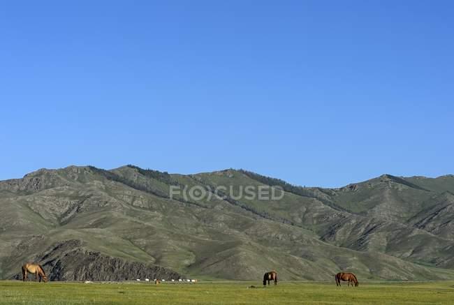Chevaux au pâturage entouré de montagnes et plateau en vallée de l'Orkhon, Mongolie, Asie — Photo de stock