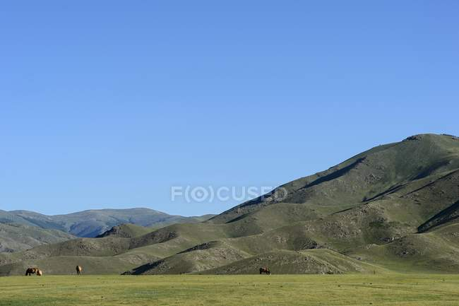 Cavalos no pasto, cercada por montanhas e planalto no vale de Orkhon, Mongólia, Ásia — Fotografia de Stock