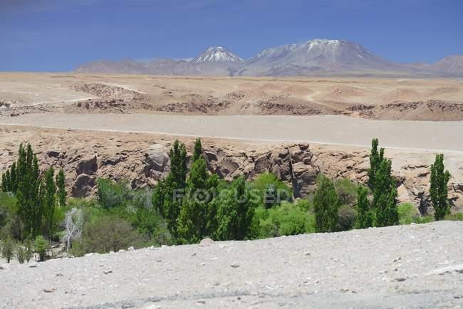 Oasi di verde nel letto del fiume, Valle de Jere, Toconao nella regione di Antofagasta del Cile, Sud America — Foto stock
