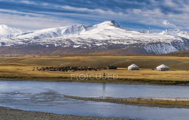 Gregge di pecore con yurte e pastore sulla riva di Khoton lago davanti a montagne innevate, Mongolia, Asia — Foto stock