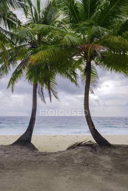 Пальмові дерева на тропічний малюнок взятий в Азії Fuvahmulah, Індійський океан, Мальдіви, атол — стокове фото