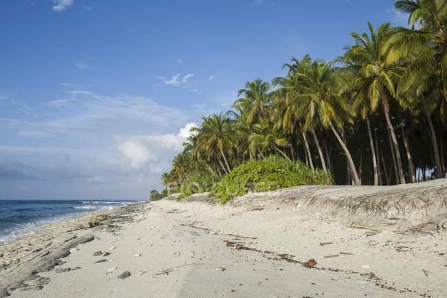 Коралові малюнок взятий з кокосових пальм на атол Fuvahmulah в Азії Індійського океану, Мальдівські острови, — стокове фото