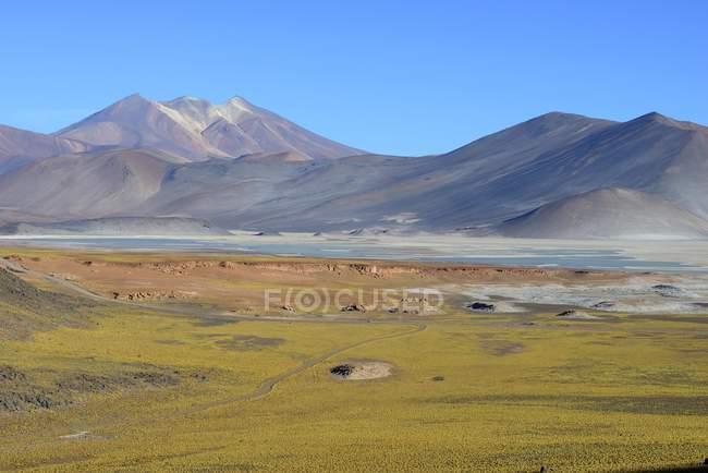 Prato verde al Salar de Talar piatto di sale nella regione di Antofagasta del Cile, Sud America — Foto stock