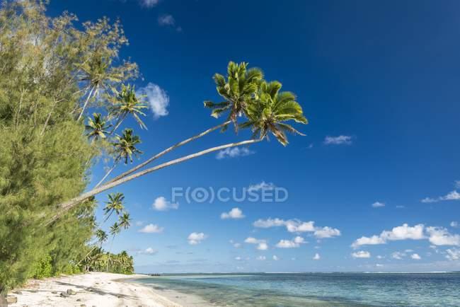 Песчаный пляж с пальмами и бирюзовой водой, Раротонга, острова Кука, Океании — стоковое фото