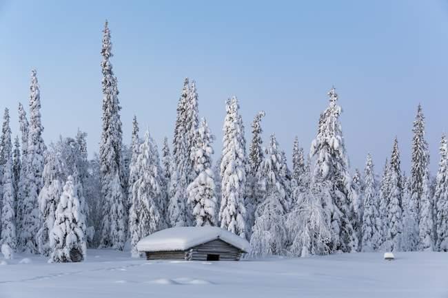 Snow-covered hut in winter landscape, Pallastunturi, Pallas-Yllastunturi National Park, Muonio, Lapland, Finland, Europe — стоковое фото