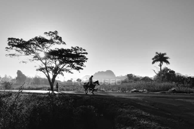 Homme sur le cheval au lever du soleil, la vallée de Viñales, Cuba, l'Amérique centrale — Photo de stock