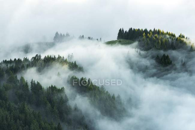 Mountain forest with morning fog, Wilder Kaiser, Scheffau, Tyrol, Austria, Europe — Stockfoto