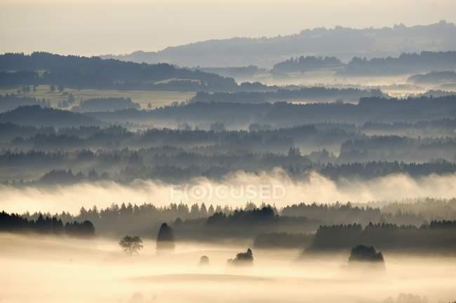 Утренний туман Ауэрберг гора, Pfaffenwinkel, Верхняя Бавария, Бавария, Германия, Европа — стоковое фото