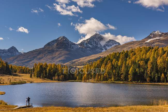 Autumnal discolored larches with mountain lake in front of snow-covered Engadine mountain peak, Pontresina, Upper Engadine, Switzerland, Europe — Stockfoto