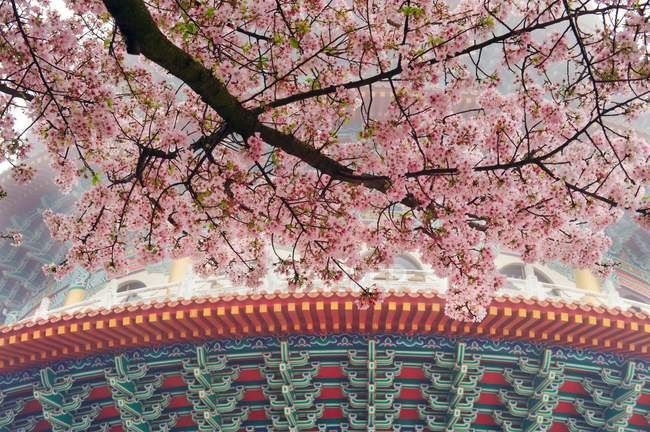 Tianyuan Temple under flowering cherry tree branch, Taiwan, China, Asia — Stock Photo