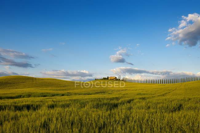 Tuscany landscape with cypresses and farmstead at sunset, Val dOrcia, Tuscany, Italy, Europe — Stock Photo