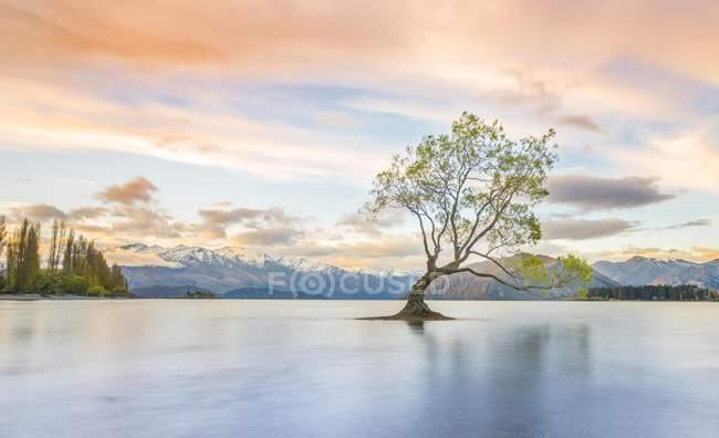 Sonnenaufgang über dem einzigen Baum im Wasser, Lake Wanaka, Otago, Southland, Neuseeland, Ozeanien — Stockfoto