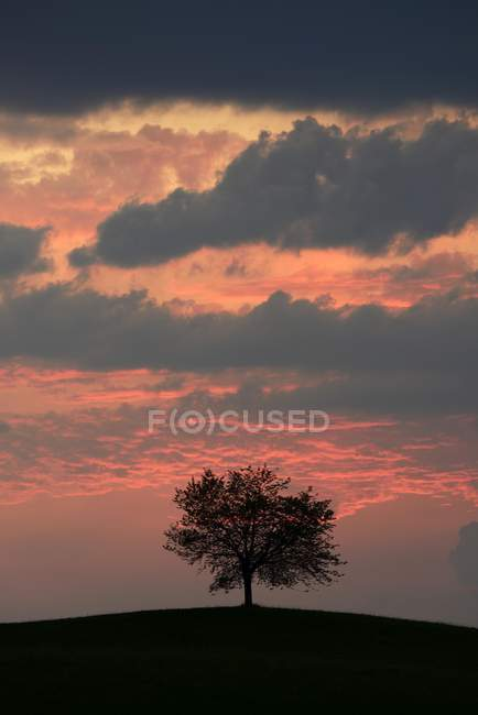 Tree silhouetted against sky with storm clouds, Hirzel, Canton of Zurich, Switzerland, Europe — Stock Photo
