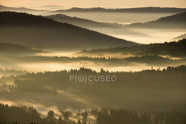 Morning fog over woodland of Sumava National Park in Czech Republic, Europe — стоковое фото