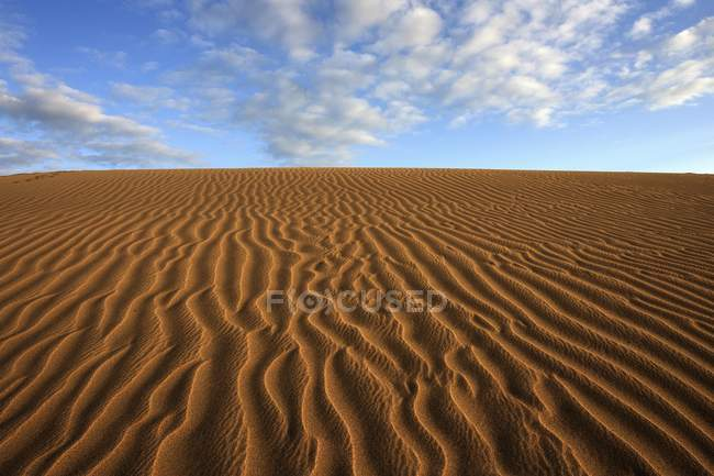 Sand dunes of Maspalomas under cloud formation in evening light, Gran Canaria, Canary Islands, Spain, Europe — Stock Photo