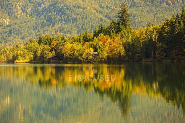 Autumnal forest at Barmsee in Kruen, Upper Bavaria, Bavaria, Germany, Europe — стоковое фото