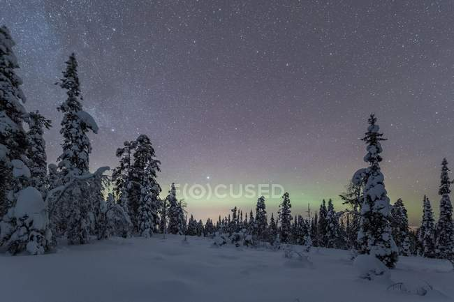 Starry sky with Milky Way and northern lights over snow-covered trees, Pyha-Luosto National Park, Lapland, Finland, Europe — стоковое фото