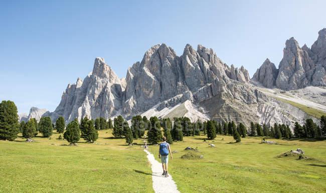 Wanderer auf Spuren im Villnosstal-Tal unterhalb der Geisler Spitzen, Sass Rigais, Dolomiten, Südtirol, Italien, Europa — Stockfoto