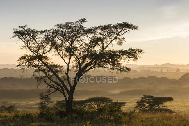Landscape in morning mist, Ishasha, Queen Elizabeth National Park, Uganda, Africa — Stock Photo