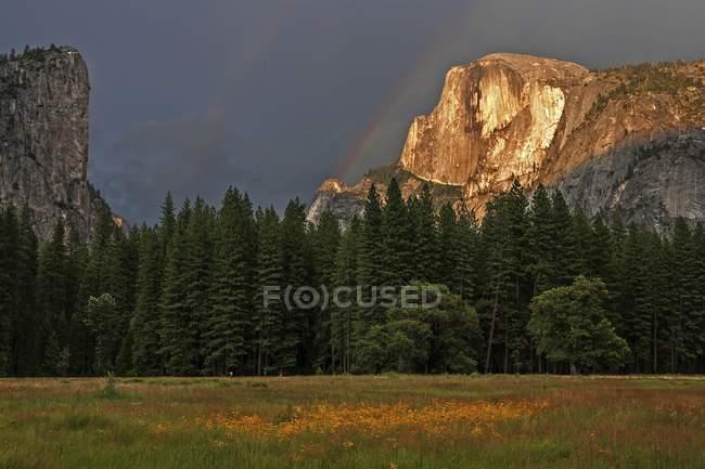 Prado de la flor en el valle de Yosemite, cúpula de mitad detrás de iluminados por el sol poniente, Parque Nacional Yosemite, Estados Unidos, Norteamérica - foto de stock