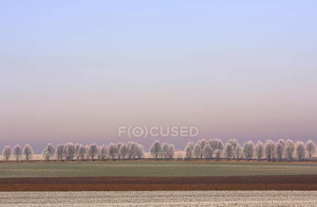 Wintry landscape with frost-covered trees and field, Thuringia, Germany, Europe — Stock Photo