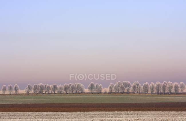 Paisagem invernal com árvores cobertas de gelo e campo, Turíngia, Alemanha, Europa — Fotografia de Stock