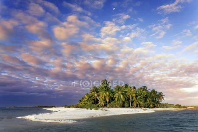 Lonely Island beach with palms, Tikehau Atoll, French Polynesia, Oceania — Stock Photo