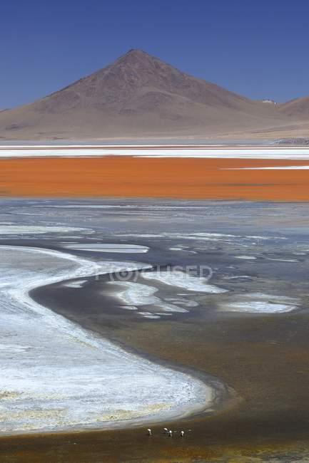 Gioco di colori dell'acqua Laguna Colorada, Altiplano, Sur Lipez, Bolivia, Sud America — Foto stock
