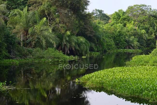 Dense vegetation on shore of river Rio Miranda, Pantanal, Mato Grosso do Sul, Brazil, South America — стокове фото