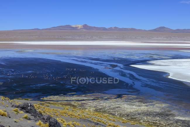 Flamingos an der Laguna Colorada, Sur Lipez, Bolivien, Südamerika — Stockfoto