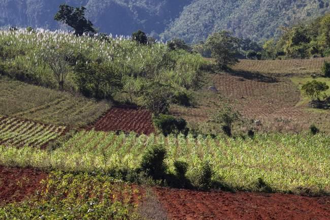 Paysage avec des surfaces agricoles, la vallée de Vinales, Pinar del Rio Province, Cuba, Amérique centrale — Photo de stock