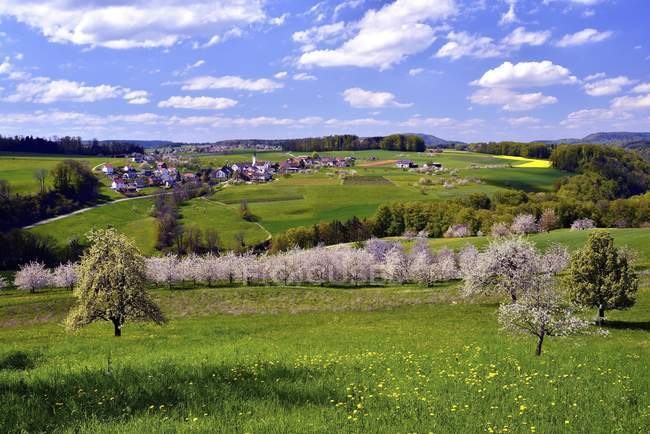 Landscape with blossoming cherry trees, Kilchberg, Canton of Basel-Landschaft, Switzerland, Europe — стоковое фото
