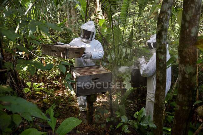 Two beekeepers with beehives in Amazon rainforest of Trairao District, Para, Brazil, South America — стокове фото