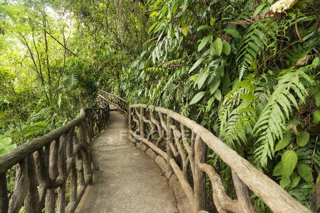Way through dense vegetation at La Paz Waterfall Gardens, Costa Rica, Central America — стокове фото