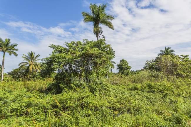 Lush vegetation in nature reserve near Guama, Zapata Peninsula, Cuba, Central America — стокове фото