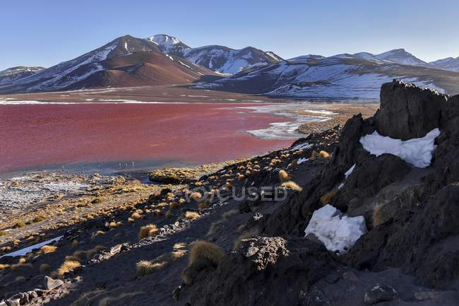 Laguna Colorada mit roten Wasser mit Algen in der Nähe von Uyuni, Bolivien, Südamerika — Stockfoto