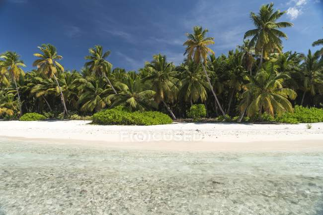 Тропические песчаный пляж с пальмами и бирюзовым морем, Parque Nacional-дель-Эсте в Доминиканской Республике — стоковое фото