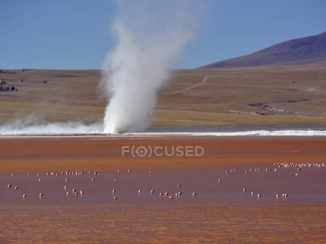 Cyclone of borax sediment on lake with flamingos, Laguna Colorada, Uyuni, Lipez, Bolivia, South America — Foto stock