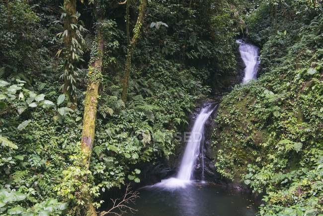 Small waterfall in cloud forest, Alajuela province, Costa Rica, Central America — стокове фото