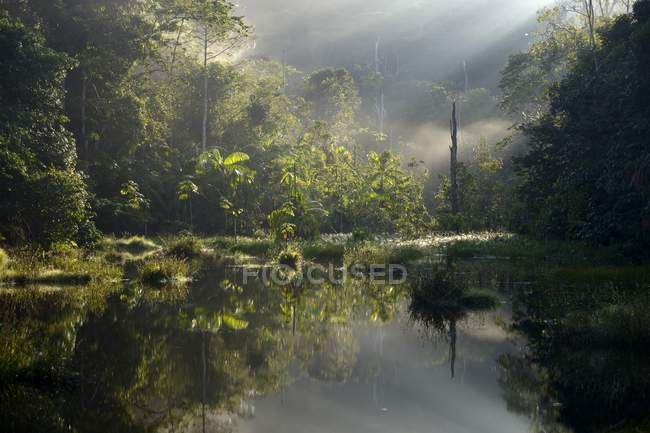 Small lake in morning light in Amazon rainforest between Itaituba and Pimental, Para, Brazil, South America — Stock Photo